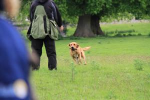 När det är ens tur att skicka hunden tar man ett steg fram ur linjen och skickar. Även när hunden är på väg tillbaka är det viktigt att stå lite framför linjen så att hunden vet var den ska ta vägen.