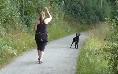Att kunna stoppa hunden i ett sök
