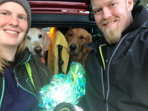 Noseworkrosetter till båda hundarna - efter massor med kämpande!