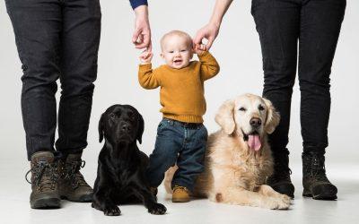 Ett barn i hundflocken: Första året med Viola
