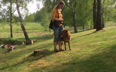 Dag 10: Hjälp heta hundar genom att styra upp dem