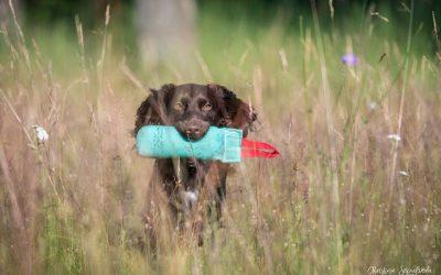 Om att ha en blyg och försiktig jakthund