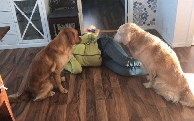 Kan din hund verkligen göra det du säger till den?