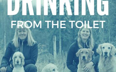 Intervjuade i Drinking from the Toilet med Hannah Brannigan