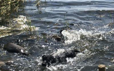 Vattenträning