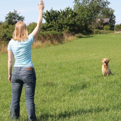 Onlinekurs: Stoppsignal - med återkoppling