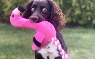 Vad ska den här hunden lära mig? (del 2)