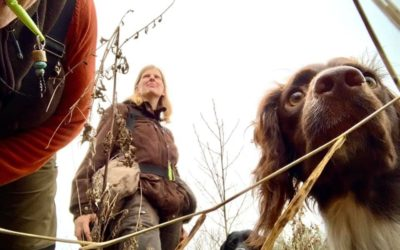 2020 glädje, sorg, kärlek, jakter och massor hundträning – trots allt